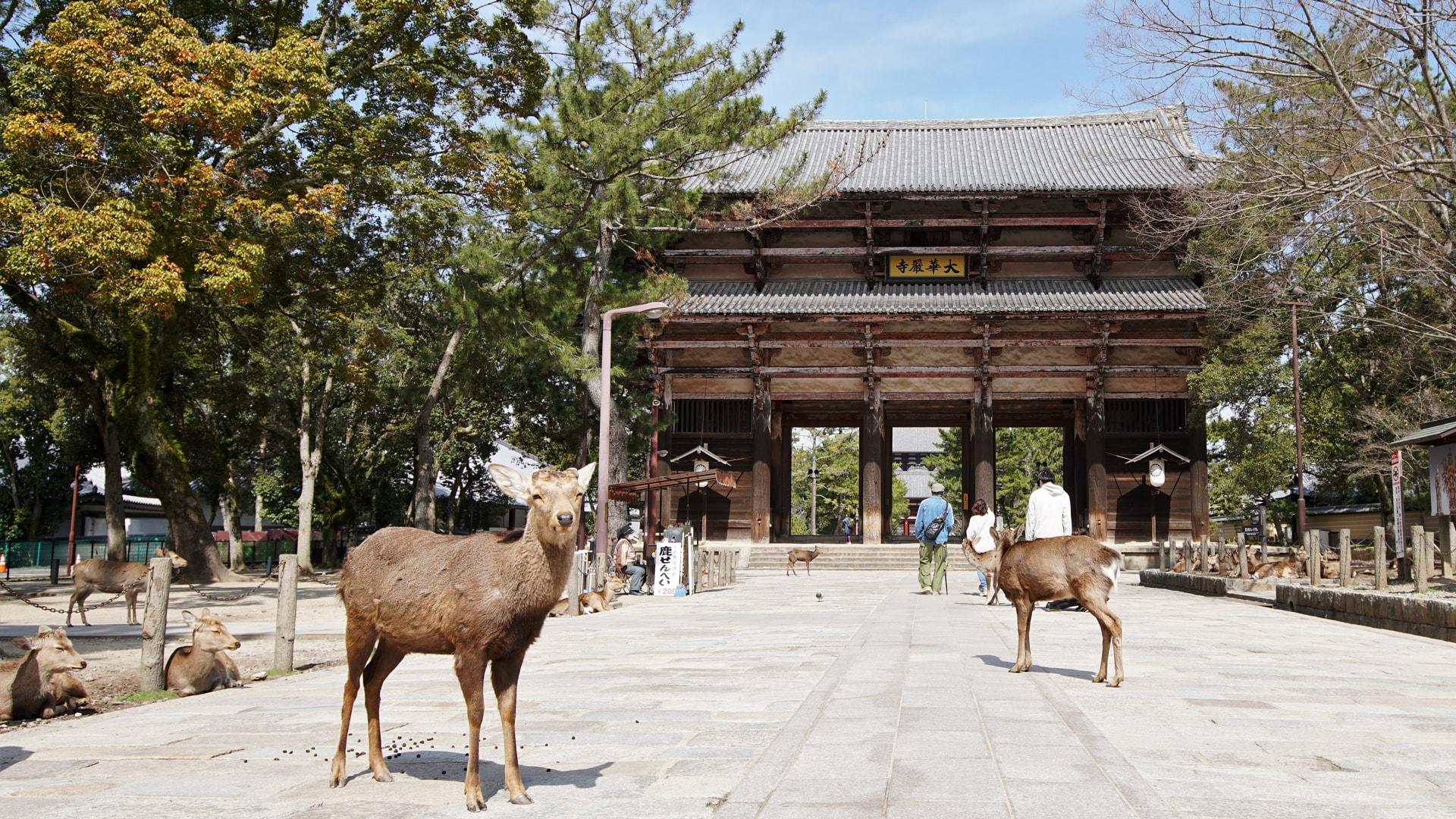 Nara et ses cerfs
